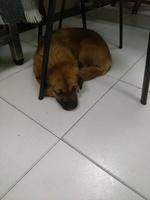 Lenda, mi perro cruce de westie hembra, tiene cansancio o fatiga y tics nerviosos