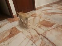Matilda, mi perro chihuahueño hembra, tiene aumento de ladridos, llantos y aullidos