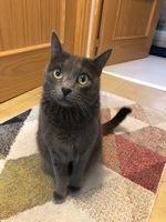 Vómito en gatos, Desconocida