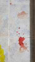 Sangre en orina en perros, Terrier escocés