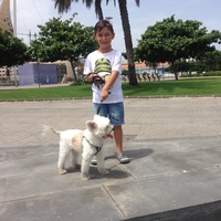 Fiebre en perros, Bichon maltés