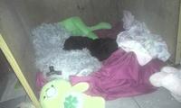 Diarrea en perros, Caniche