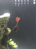 I have a question about a pet