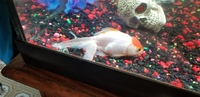 I have a question about Brush, my male fish unknown