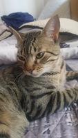 Tom, mi gato cruce macho, tiene diarrea, diarrea amarilla y mal apetito