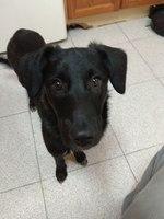 Taca, mi perro cruce de golden retriever hembra, tiene muerde su cola y muerde