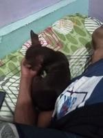 Cansancio o fatiga en perros, Pinscher miniatura