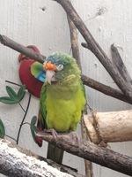Vómito en aves, Desconocida