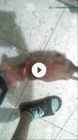 Silbido al respirar en perros, Chihuahueño