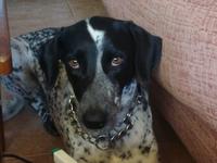 Ataque epiléptico en perros, Dálmata