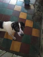 Picor y rascarse en perros, Desconocida