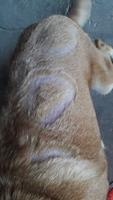 Sufre un problema dermatológico en perros, Desconocida