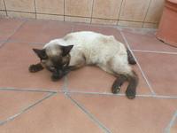 Mínimo, mi gato cruce macho, tiene rigidez en las patas traseras, debilidad y dificultad para mover las patas traseras