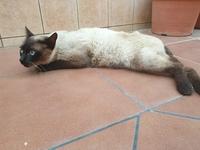 Rigidez en las patas traseras en gatos, Desconocida