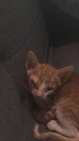 Ojos entrecerrados en gatos, Desconocida