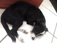 Kafka, mi perro cruce de chihuahueño macho, tiene vómito, inclina la cabeza y arcadas