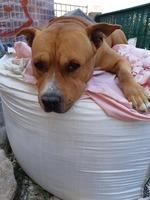 Diarrea en perros, Desconocida