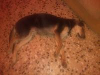 Deshidratación en perros, Desconocida