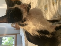 Pérdida de peso o adelgazamiento en gatos, Desconocida