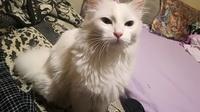 Aumento de ladridos, llantos y aullidos en gatos, Desconocida