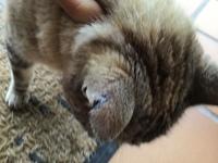 Heridas en gatos, Desconocida