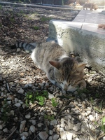Dificultad al caminar o levantarse en gatos, Desconocida