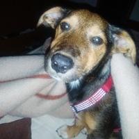 Vómito amarillo en perros, Desconocida