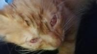 Clyde, mi gato cruce macho, tiene tercer párpado visible