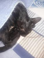 Baby, mi gato desconocida hembra, tiene cansancio o fatiga y mal apetito