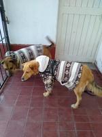 Rusio, mi perro cruce macho, tiene desánimo, decaído, triste, depresión, ataque epiléptico y desmayos