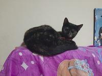 Estrella, mi gato cruce hembra, tiene vómito, come cosas no alimenticias (plásticos, calcetines etc.) y heridas