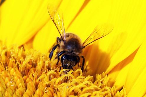 Seminario sulle api in Cascina Biblioteca