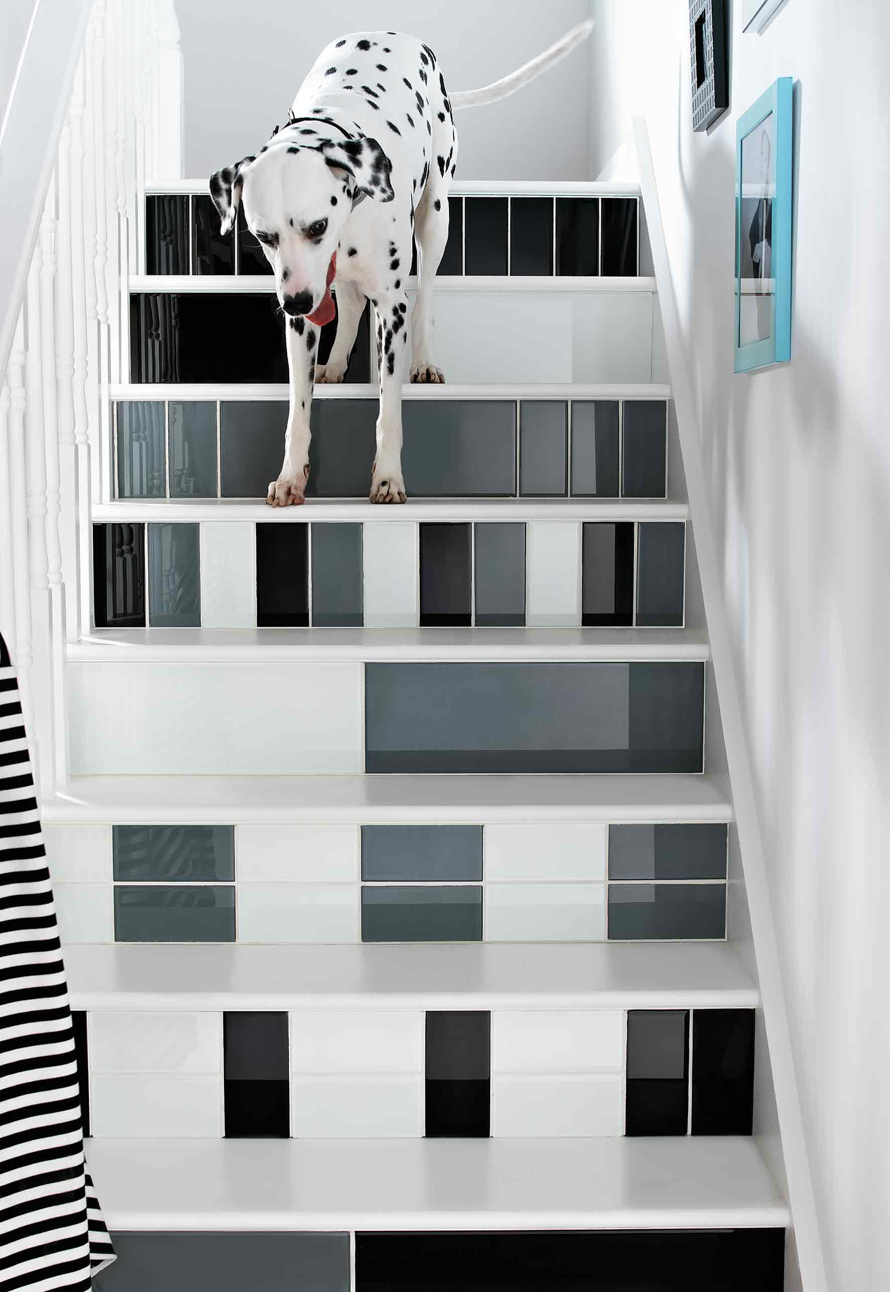 Monochrome tiled Staircase with dalmation Dog
