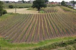 The Farm, Scholes