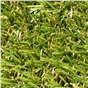 fame-25mm-artificial-grass-x-4m-wide-sold-per-linear-metre-