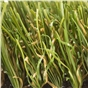 fame-25mm-artificial-grass-x-4m-wide-sold-per-linear-metre-2