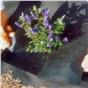 weed-control-2mtr-x-25mtr-weedban-70-in-transit-bag-only-ref-07020025.jpg