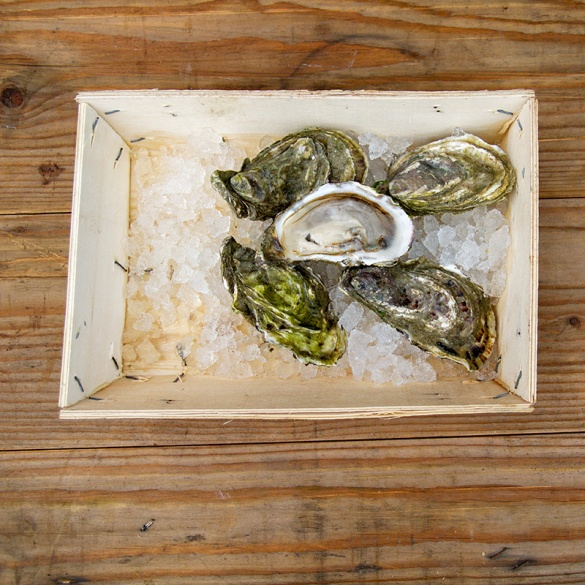 Guernsey Oysters