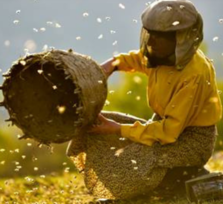 Documental del Mes: 'Honeyland'