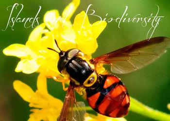 Macaronesian.org; islas y biodiversidad