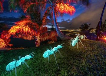 Naturaleza Encendida vuelve a el Palmetum de Santa Cruz