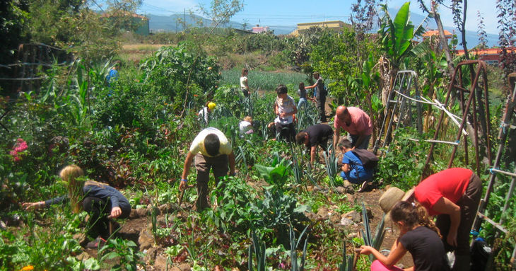 'Bombas de semillas' y 'El museo como ecosistema' Fotonoviembre Tenerife 2020