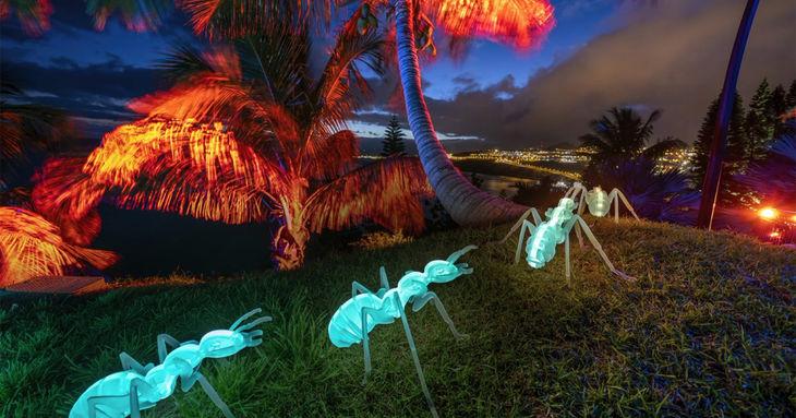 Naturaleza Encendida vuelve a el Palmetum de Santa Cruz 2021