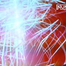 Numa Circuit 2019 Supersilent