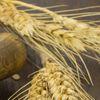 Décima Feria de semillas tradicionales de Canarias