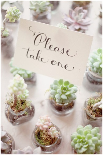 Wedding Favours - Mini Plant