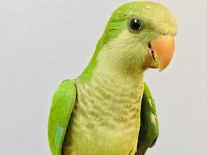 Birds for sale | Birdtrader