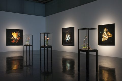 Mat Collishaw at the Laing Art Gallery, Newcastle