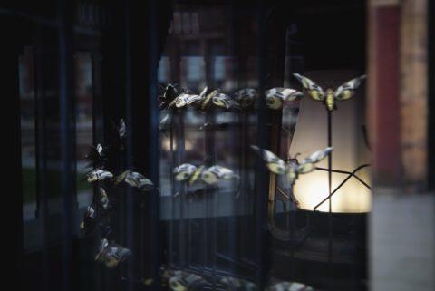 Mat Collishaw's <em>Magical Lantern</em>
