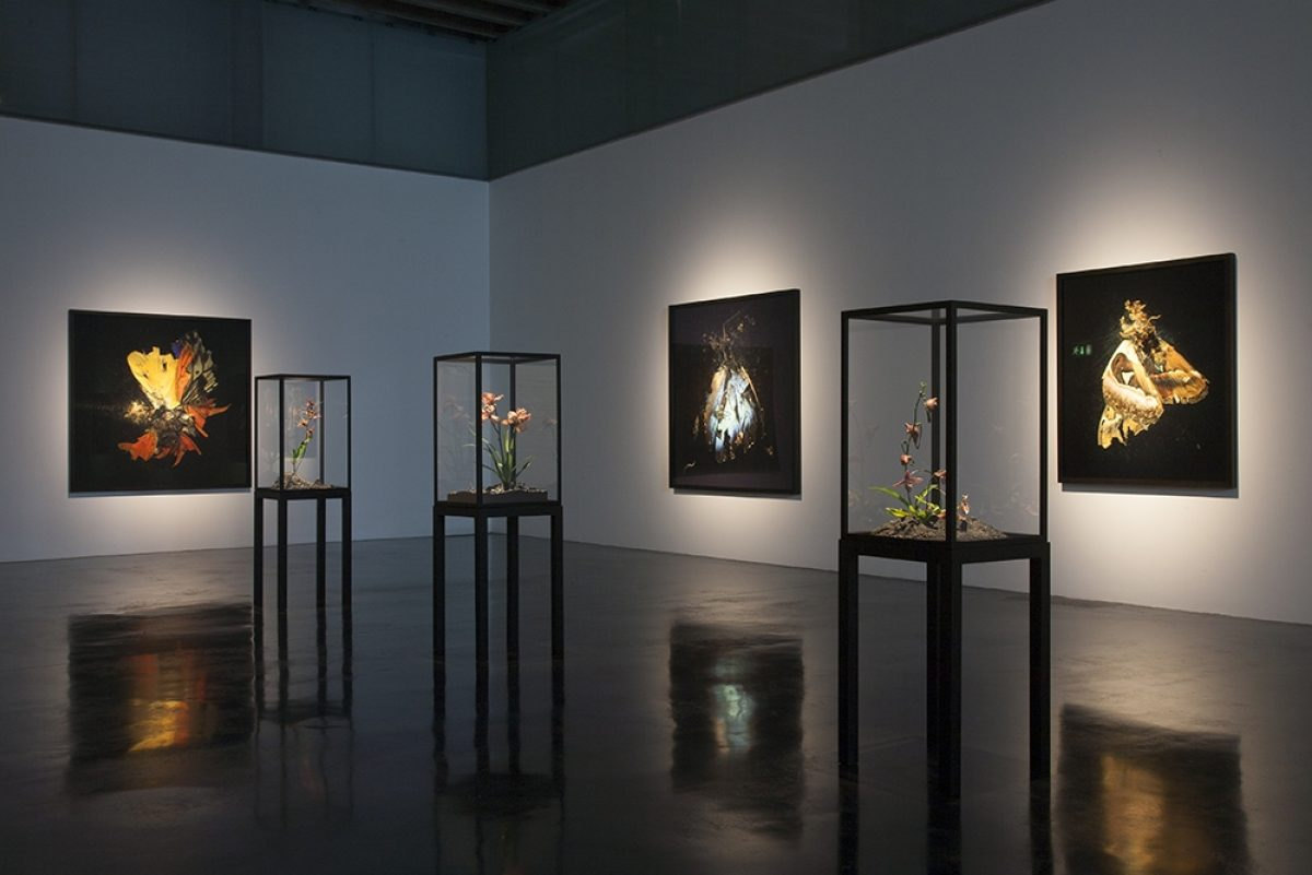 Mat Collishaw New Art Gallery Walsall Installation View 2015 Blain Southern 3
